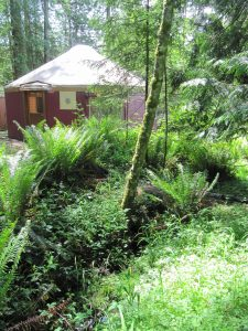 Airbnb accommodation short term vaction rental yurt on Salt Spring Island